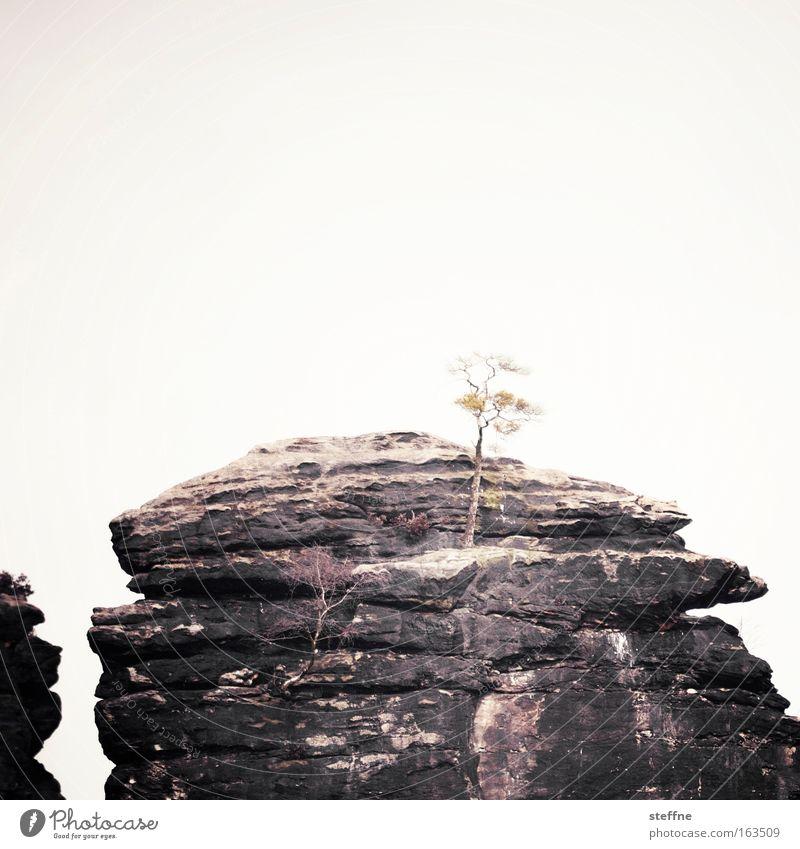 Big in Japan Natur Baum Berge u. Gebirge Landschaft Kraft Felsen Gipfel Sächsische Schweiz Geborgenheit Kampfkunst Sachsen Asien standhaft Wolkenloser Himmel