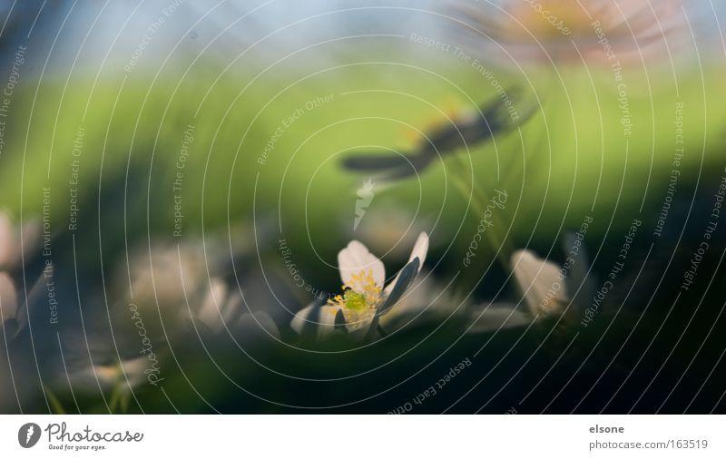 WINDRÖSBUSCHCHEN Natur grün Pflanze Tier gelb Wiese Frühling Blüte Park Gesundheit Zufriedenheit Kraft Fröhlichkeit Lebensfreude Grünpflanze Frühlingsgefühle