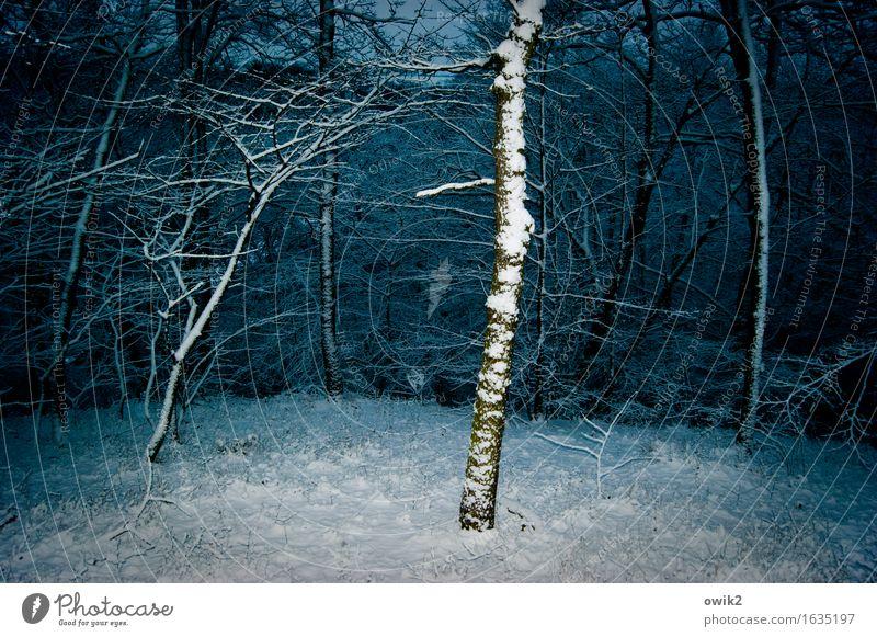 Unterholz Winter Eis Frost Schnee Baum Ast Wald bedrohlich kalt Idylle Farbfoto Außenaufnahme Menschenleer Textfreiraum links Textfreiraum rechts Abend
