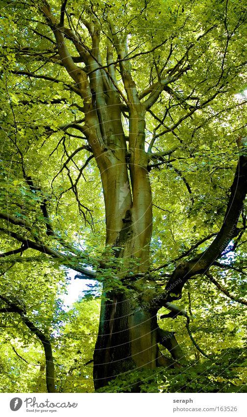 Grüne Lunge Farbfoto mehrfarbig Morgendämmerung Tag Sonnenlicht Zentralperspektive Umwelt Natur Landschaft Pflanze Baum Blatt Grünpflanze Wald Holz Erholung
