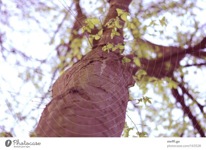 mein Freund der Baum Umwelt Natur Landschaft Frühling Sommer Pflanze Blatt Wildpflanze Park Holz alt kalt trist braun grün Detailaufnahme Ast Zweige u. Äste
