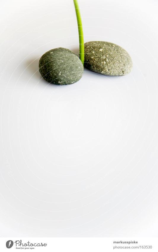 Stängel Blume grau Stein Kraft Urelemente weich Zeichen exotisch Klischee Grünpflanze muskulös Topfpflanze