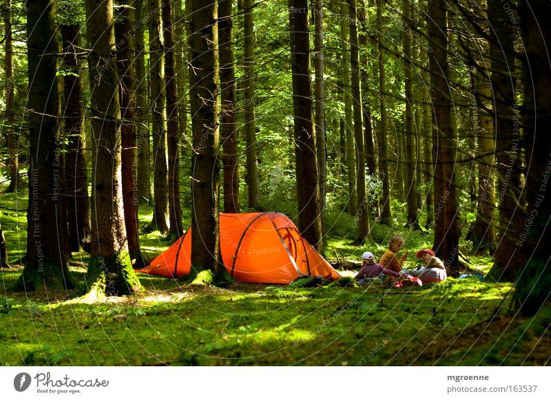 Leuchten im grünen Wald Farbfoto mehrfarbig Außenaufnahme Tag Licht Schatten Kontrast Zentralperspektive Lifestyle Ferien & Urlaub & Reisen Tourismus Expedition