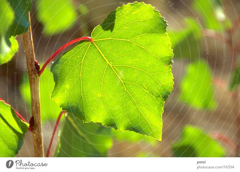 Grünes Blatt grün rot