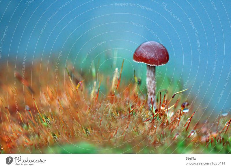 wie eine Eins Natur Pflanze Herbst Gras Moos Wildpflanze Pilz Pilzhut Wiese Wachstum klein verrückt schön blau braun mehrfarbig grün orange Idylle Tau mickrig 1