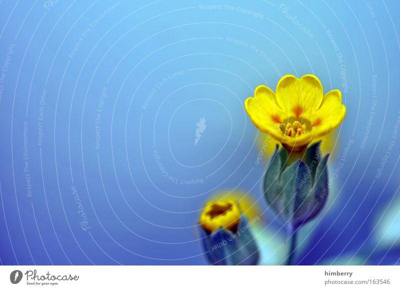 hello again Natur schön Blume blau Pflanze gelb Gefühle Glück träumen Park Zufriedenheit Stimmung klein gold frisch Fröhlichkeit