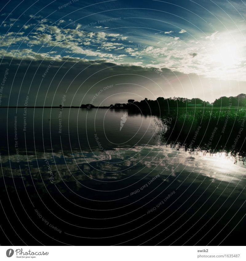 Weiter Himmel Ferne Freiheit Umwelt Natur Landschaft Wasser Wolken Horizont Klima Schönes Wetter Pflanze Gras Sträucher Küste Darß