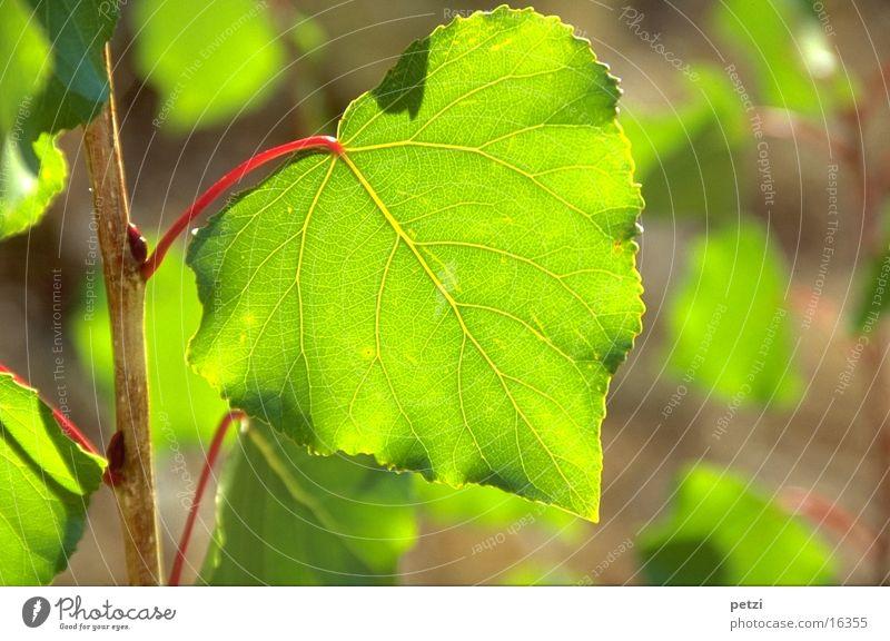 Grünes Blatt Sonne grün rot