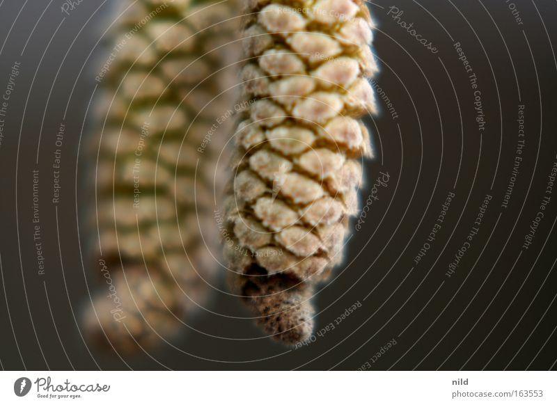 Provokationstest Natur Baum Pflanze Umwelt Frühling Blüte ästhetisch Pollen Haselnuss Allergiker