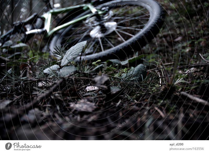 Radumfall Natur grün Pflanze Wege & Pfade braun Fahrrad Verkehrsmittel Mountainbike Waldboden