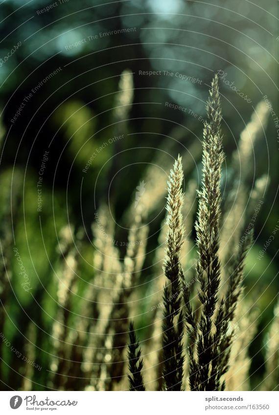 ^ Natur Pflanze Sommer Gras Zufriedenheit Umwelt Fröhlichkeit Schönes Wetter