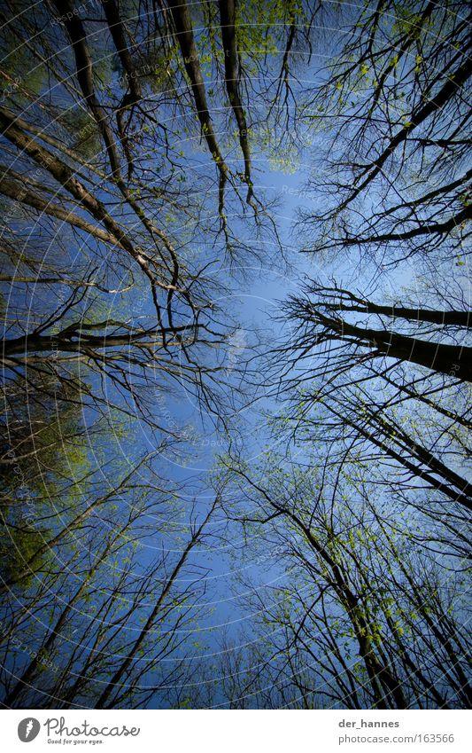 Jeder will nach oben! Natur alt Himmel Baum grün blau Sommer Blatt Wald Frühling Park Landschaft wandern Umwelt groß hoch