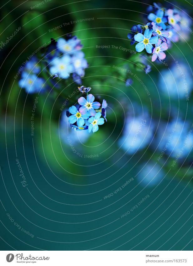 Vergiss' es! blau Pflanze schön grün Sommer Blume Gefühle Frühling Blüte Wohnung leuchten Dekoration & Verzierung frisch ästhetisch Zeichen Romantik