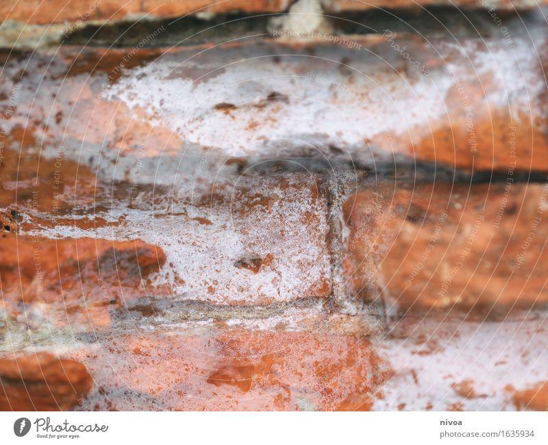 Backstein 1 Haus Bauwerk Gebäude Mauer Wand Fassade Stein Sand Beton Linie bauen rot weiß Schutz Geborgenheit Zusammenhalt Farbfoto Außenaufnahme Detailaufnahme