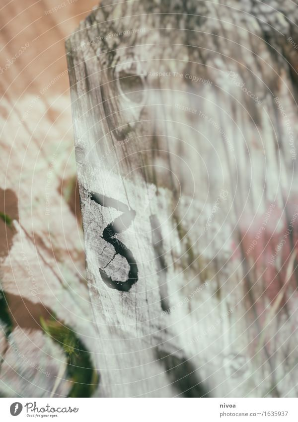 31 30-45 Jahre Erwachsene Kunstwerk Umwelt Holz Zeichen Schriftzeichen Ziffern & Zahlen Schilder & Markierungen Graffiti Streifen entdecken zeichnen schwarz