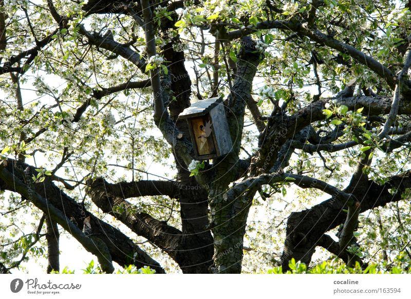 HEIMlich Baum Blüte Frühling Wärme Wohnung Ast Blühend aufwachen Nest Futterhäuschen