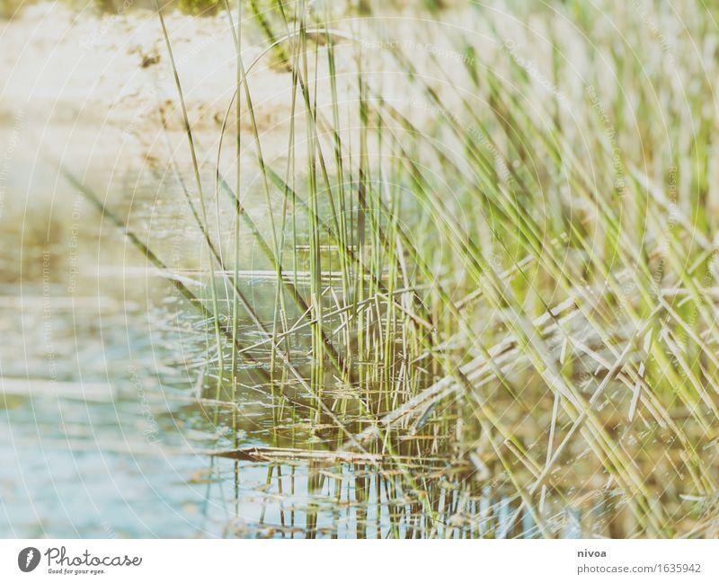 Lass Gras drüber wachsen Natur Ferien & Urlaub & Reisen Pflanze Sommer Wasser Meer Erholung Landschaft ruhig Ferne Umwelt Küste Schwimmen & Baden See