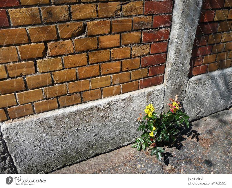 Suchbild Pflanze Sommer Einsamkeit Wand Blüte Wege & Pfade Mauer klein Stein Linie Fassade Sträucher einfach Schönes Wetter Neigung Backstein