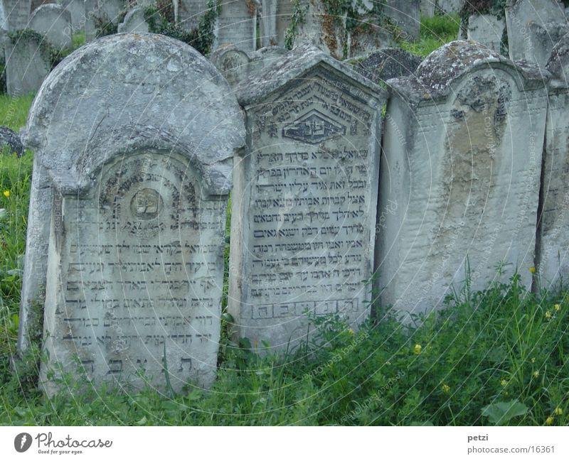 Grabsteine Gras Schriftzeichen alt verfallen