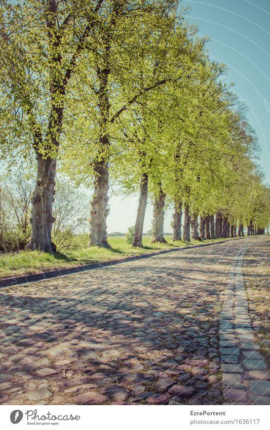 Bäume Allee Kopfsteinpflaster Strasse Natur Himmel Frühling Sommer Pflanze Baum Blatt Verkehrswege Straße Wege & Pfade blau grau grün Farbfoto Gedeckte Farben