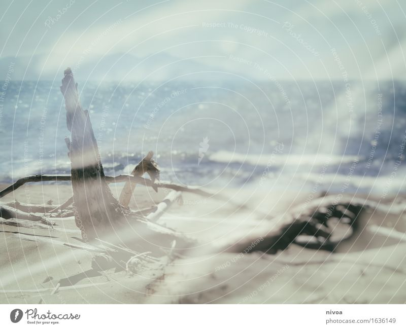 Angeschwemmt Ferien & Urlaub & Reisen Sommer Strand Meer Wellen Umwelt Natur Landschaft Pflanze Urelemente Erde Sand Wasser Himmel Sonne Frühling Klima