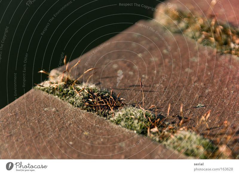 Florale Fugen Natur Wasser Pflanze rot Sommer ruhig Tier gelb Wand Gras Sand Stein Mauer Frühling braun gold