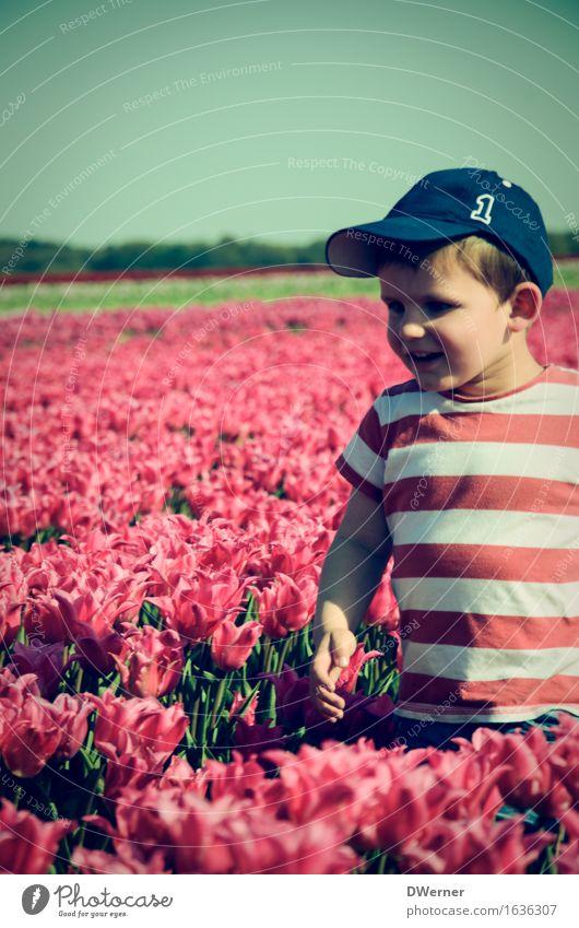 Blumenfreund Mensch Kind Himmel Natur Pflanze Sommer Landschaft Freude Umwelt Frühling Wiese Junge Freiheit rosa Park