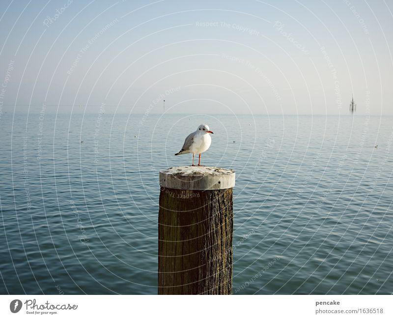 rund | schau Himmel Sommer Wasser Landschaft Tier Frühling Holz See Vogel Wasserfahrzeug Horizont frei Wellen Wildtier Erfolg beobachten