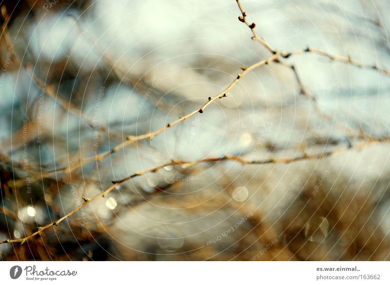 grazil. Natur schön Pflanze Blatt Herbst Blüte Frühling Park Gesundheit Umwelt frisch neu Wachstum Sträucher Ast Blühend