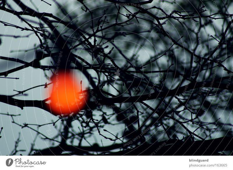 Another Lonely Light Baum rot Freude Farbe gelb Lampe Stimmung Feste & Feiern gold Glas Geburtstag leuchten rund Romantik Veranstaltung Lebensfreude