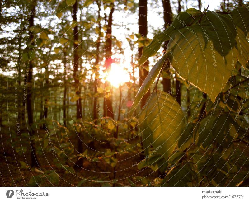 Naturerlebnis kostenlos Farbfoto Gedeckte Farben Außenaufnahme Tag Dämmerung Licht Lichterscheinung Sonnenlicht Sonnenstrahlen Sonnenaufgang Sonnenuntergang