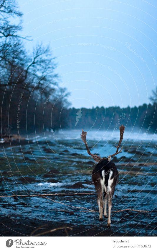 Arschgeweih blau Pflanze Winter ruhig Tier Wald dunkel Traurigkeit Kraft Feld dreckig gehen Nebel Armut Erde Trauer