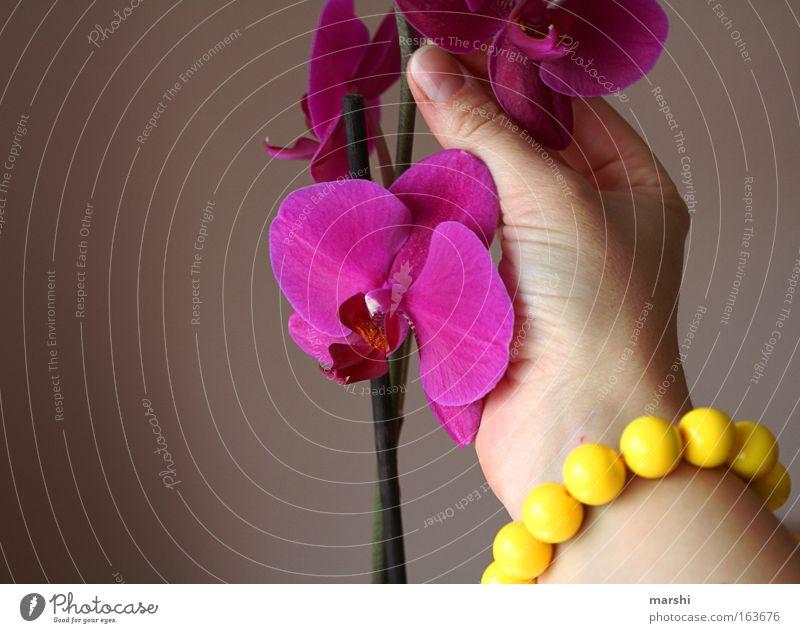 orchIDEEN sammeln Natur Hand schön Pflanze Blume Freude Gefühle Frühling rosa Dekoration & Verzierung violett Duft Orchidee Armband pflücken Topfpflanze