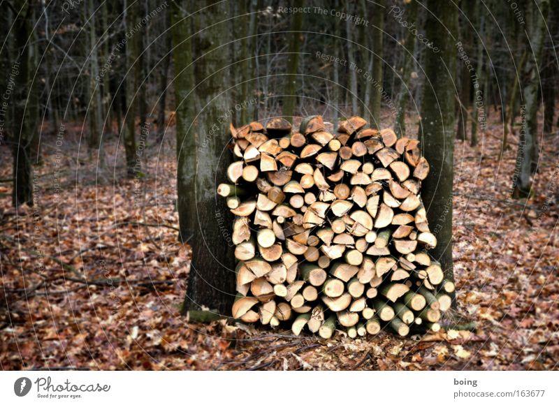 ein Ster Buche frisch geschlagen grün Winter Wald kalt Arbeit & Erwerbstätigkeit Holz braun Umwelt gold Energiewirtschaft Warmherzigkeit Landwirtschaft Kasten Stress anstrengen nachhaltig