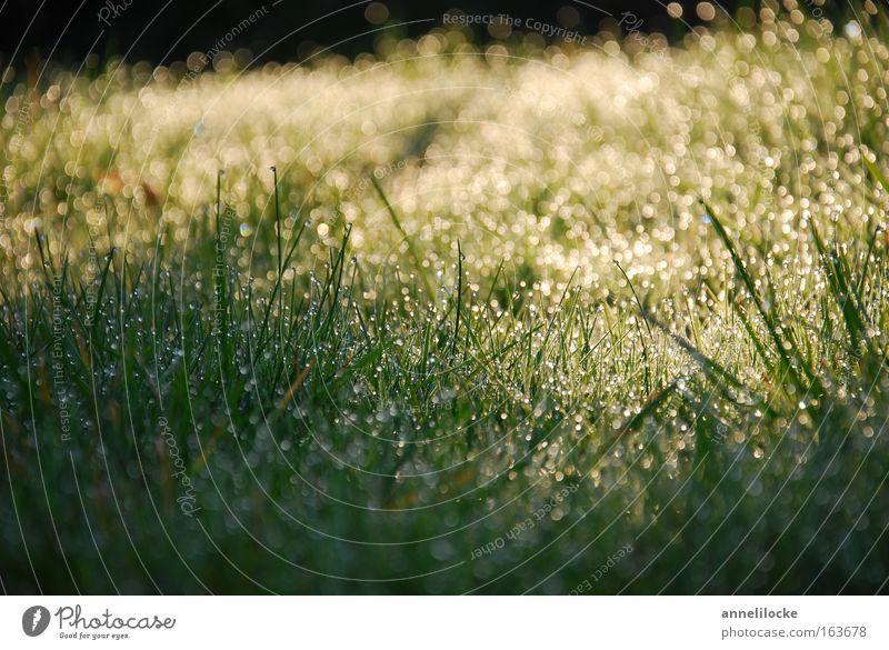Sonnenaufgang Außenaufnahme Nahaufnahme Morgendämmerung Sonnenlicht Sonnenstrahlen Gegenlicht Froschperspektive Umwelt Natur Pflanze Erde Wasser Wassertropfen