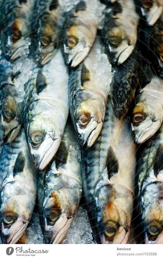 Fischi Fischi Makrele Eis Fischmarkt viele Schuppen Tod Markt frisch gereiht Fischrestaurant augen kalt fische