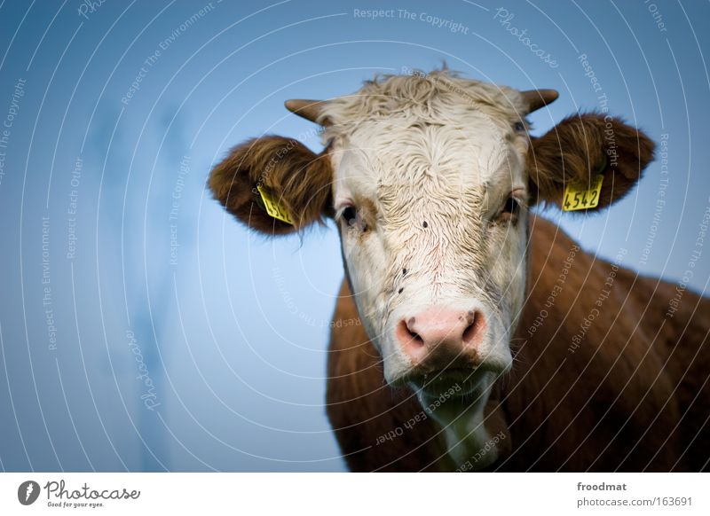 4542 Farbfoto Außenaufnahme Textfreiraum links Tag Schwache Tiefenschärfe Zentralperspektive Weitwinkel Tierporträt Oberkörper Vorderansicht Blick