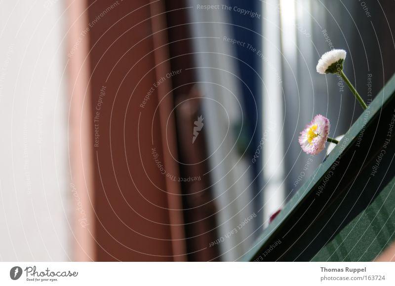 Blümchen grün Pflanze Blume Haus Fenster Wand Blüte Gebäude Stein Mauer braun Fassade trist Balkon Optimismus