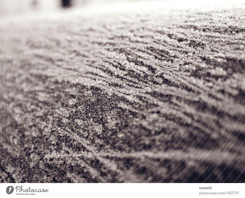 frostgewächs I Nahaufnahme Detailaufnahme Makroaufnahme Winter Dekoration & Verzierung Skulptur Eis Frost Mantel Kristalle ästhetisch hell kalt grau Schutz