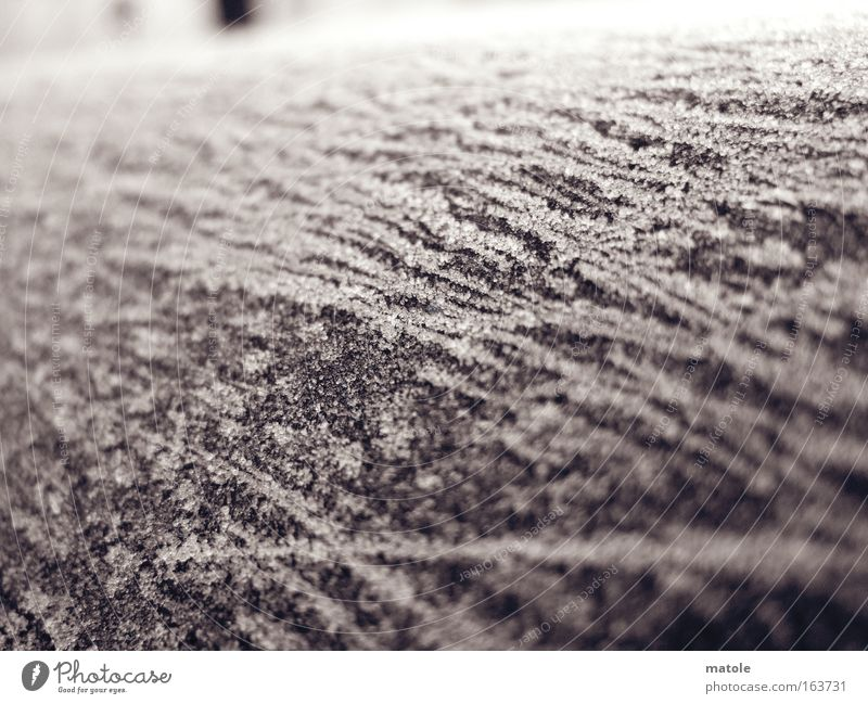 frostgewächs I Winter kalt grau Eis hell ästhetisch Frost Dekoration & Verzierung Schutz Vergänglichkeit Skulptur Mantel Nahaufnahme Kristallstrukturen