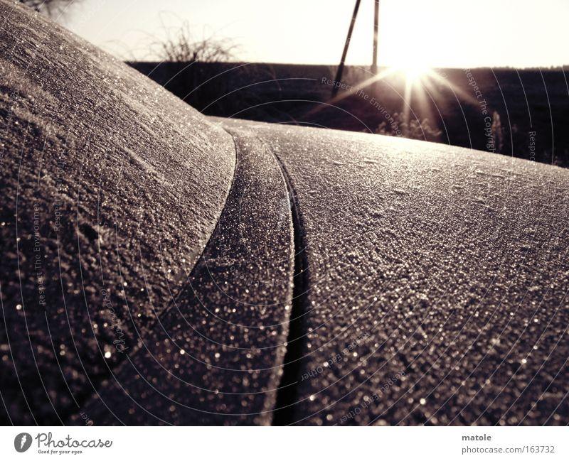 frostgewächs II Winter kalt Horizont Eis Dekoration & Verzierung ästhetisch Vergänglichkeit Schutz Frost Mantel Oberfläche Kristallstrukturen filigran rau