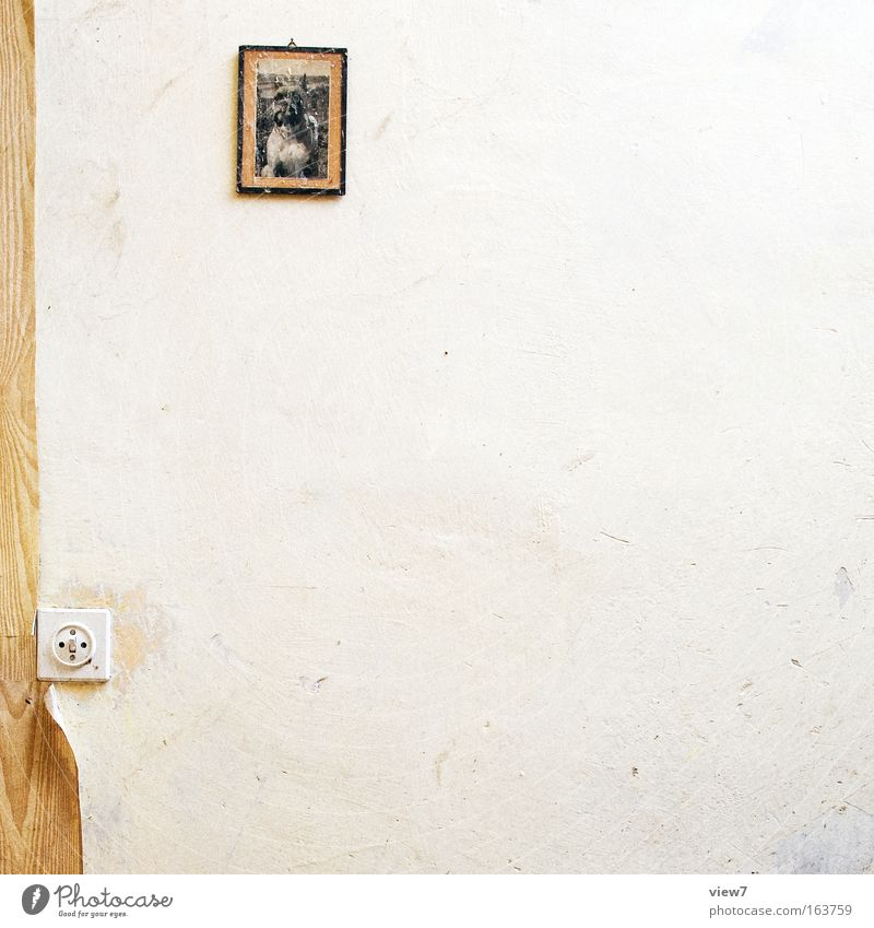 Schnuffi alt weiß Haus Tier träumen Hund Stein Traurigkeit Raum Kunst Wohnung klein gold trist Technik & Technologie Kitsch