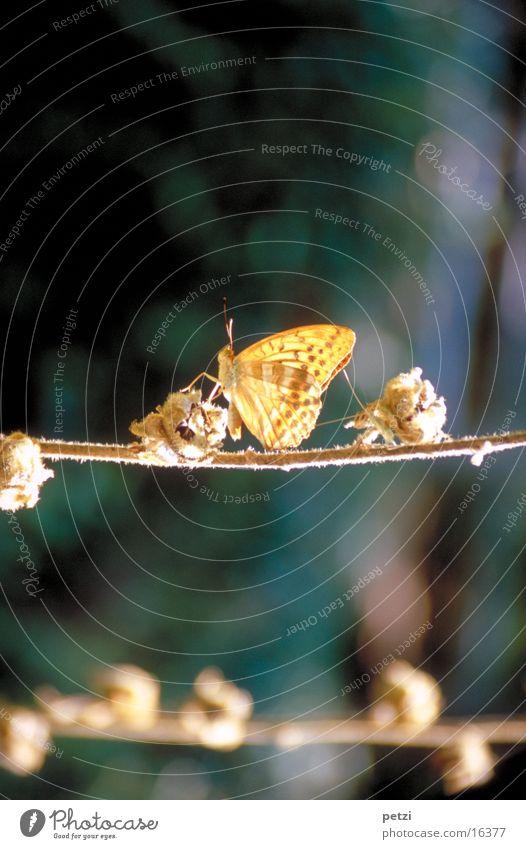 Schmetterling Blüte Beine hell Seil Flügel Fühler