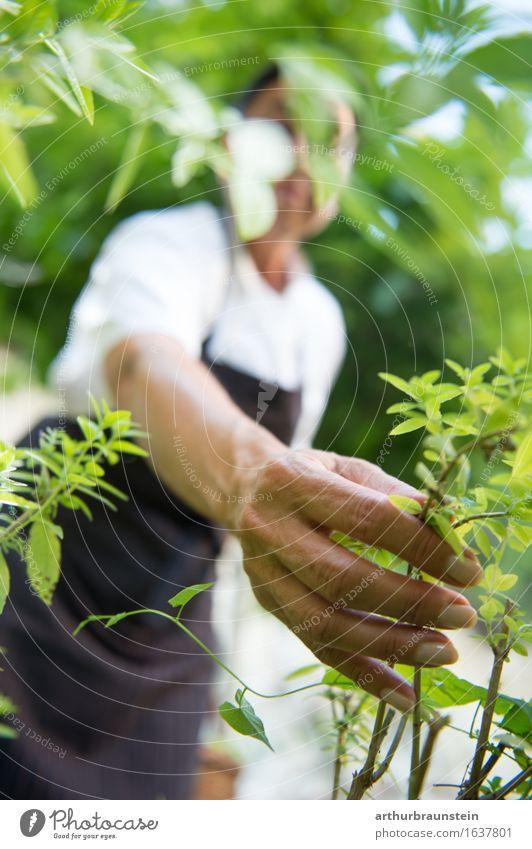 Frau beim Kräuter pflücken Mensch Natur Pflanze Sommer grün Gesunde Ernährung Hand Freude Wald Erwachsene Umwelt Leben natürlich feminin Gesundheit