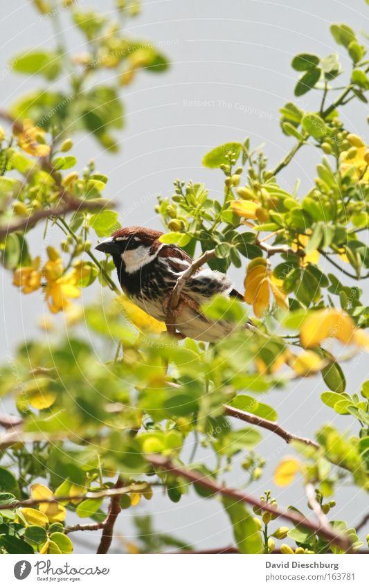 Sit & chill Natur grün Sommer Pflanze Tier Blatt gelb Frühling Blüte Vogel Wildtier Sträucher Blühend Tiergesicht Zweig Duft