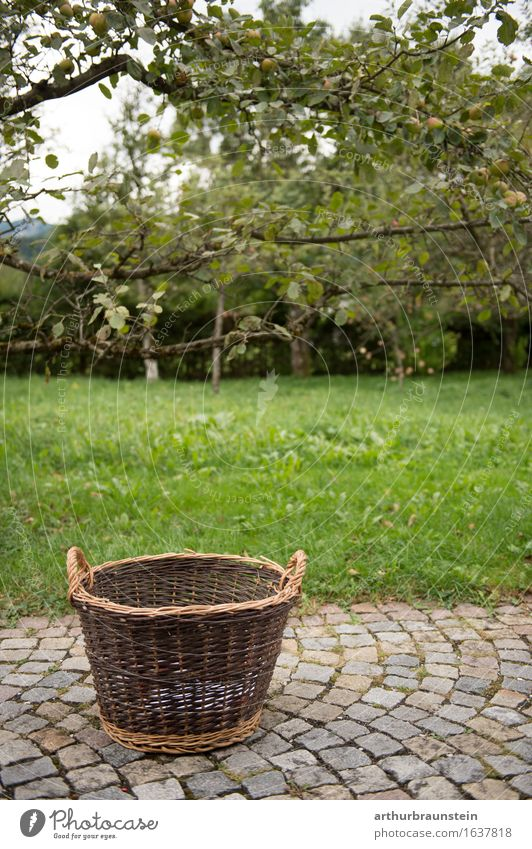 Korb für Obsternte Natur Pflanze Sommer Baum Gesunde Ernährung Umwelt Wiese natürlich Gesundheit Garten Lebensmittel Stein Frucht Park Freizeit & Hobby frisch