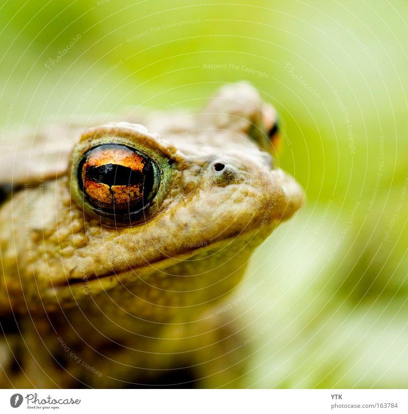 Schau mir in die Augen, Kleines! Natur schön grün Auge Tier träumen Wärme Zufriedenheit Romantik Tiergesicht bedrohlich Küssen beobachten wild fantastisch außergewöhnlich