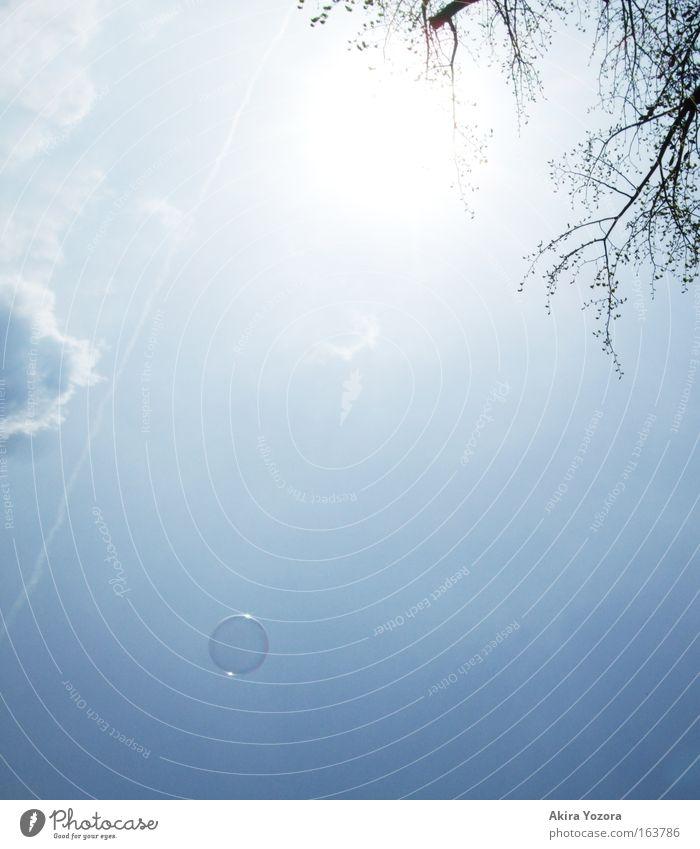 [Harusaki|DD] Fly away Himmel Baum Sonne Wolken Freiheit fliegen frei Hoffnung Unendlichkeit Schönes Wetter Frühlingsgefühle