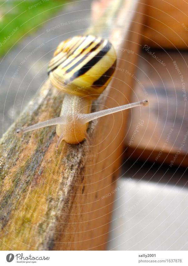 immer den Fühlern nach... Tier Schnecke 1 Freundlichkeit Neugier schleimig Wege & Pfade Balken Schwebebalken Schneckenhaus langsam krabbeln unterwegs Garten