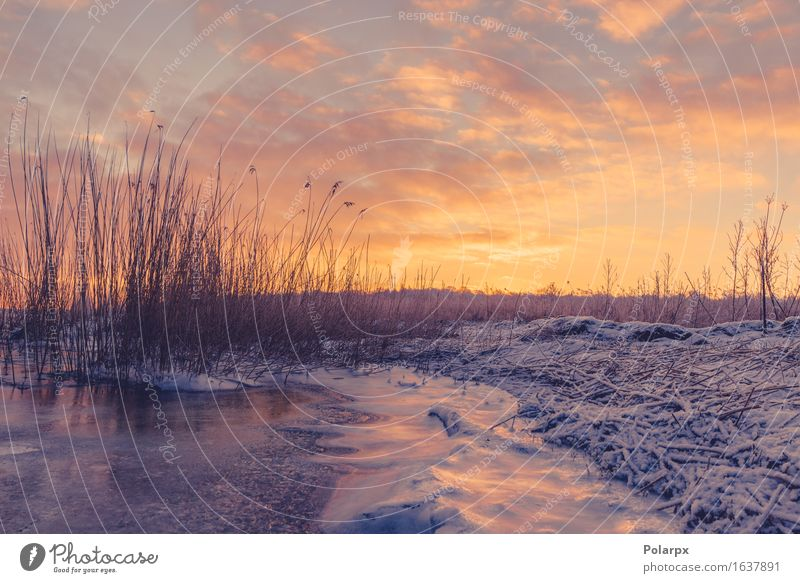 Gefrorener See mit Grasschattenbildern im Sonnenaufgang schön Strand Meer Winter Schnee Umwelt Natur Landschaft Pflanze Himmel Wolken Küste Fluss frieren dunkel